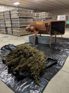 HEMP STRIPPING